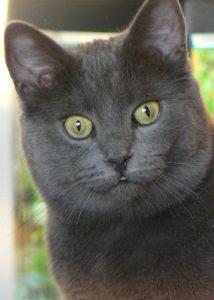 Cat with staring eyes - magnus rosendahl
